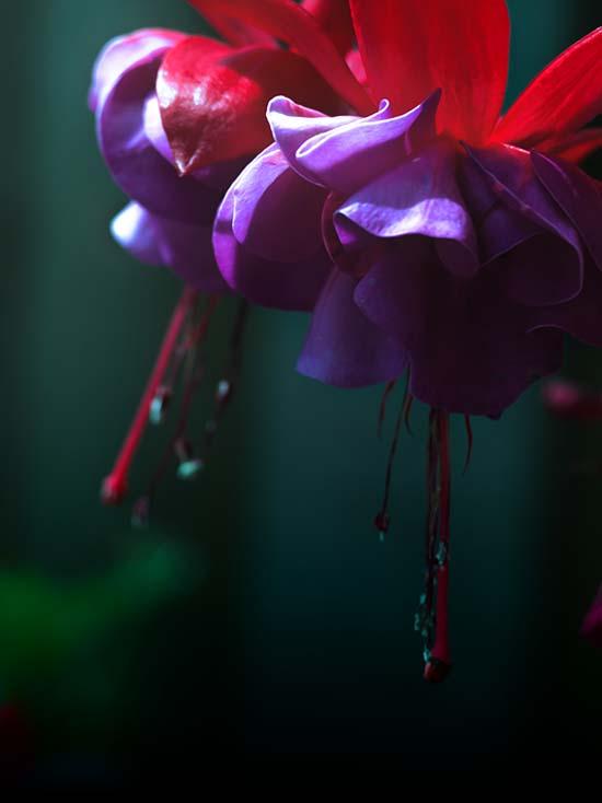 Photography - Deep Gradient by Nicholas M Vivian
