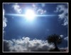 Heaven Light (Kinryuu_JFJ) Tags: light sky sun tree nature heaven bonsai loud sunshotsanyweather abigfave theperfectphotographer