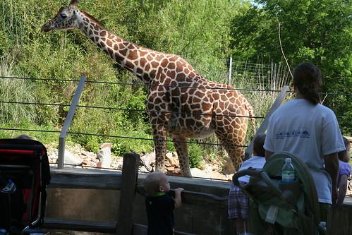 Birmingham Zoo Trip
