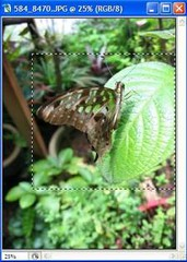 Butterfly collage tutorial - a rectangular marquee selection border