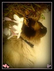 Florecitas (aunqtunolosepas♥) Tags: pet cats pets flores flower cute animal animals cat feline bea sweet perfil flor adorable gatos gato missy gata felinos felino animales mascota mascotas gatita aunqtunolosepas