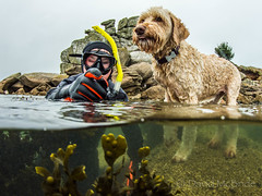 2017 Kian, Ferny & Loaded Camel (davidmcbridephotography) Tags: labradoodle dog snorkeller swimmer camel sea united kingdom isles scilly scillies boy seaweed exhilerating freezing porthellick beach adventure awesome fun son pooch nikon nauticam zen scuba snorkel waterbaby cornwall south school holidays adventurer explorer mcbride images media marine scubapro rare unusual different typhoon aqualung schiller holiday suites explore enjoy buddies pals cool split swimming ramble history nature together time stock water family orange natur geographic traveller nikkor dawg national historic treasure formation lamdmark wasser
