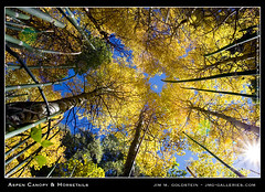 Aspen Canopy and Horsetails (jimgoldstein) Tags: california brown mountain tree green nature yellow fallcolor aspen sierranevada horsetail stockphoto easternsierra flickrsbest jmggalleries jimmgoldstein superbmasterpiece diamondclassphotographer flickrdiamond