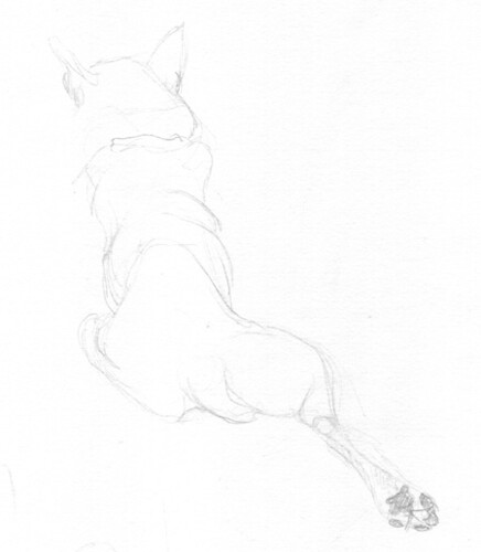 fish dog 2