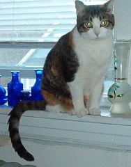 IM000482.JPG (semibold) Tags: animals lucy kitties
