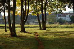 DSC_0019 (jakub_hla) Tags: trees light shadow brown sunlight house tree green grass leaves yellow leaf mud path shade trunk ostrov afsdx1870mmf3545g