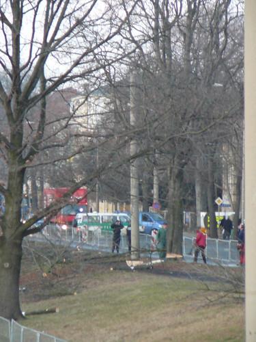 Baumfällarbeiten an der Bautzner Straße (08)