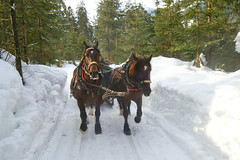 Horse carriage on the road to mountains. (v.plessky) Tags: winter horse landscape austria raw carriage minolta sigma 2006 explore dynax7d maxxum7d jpeg pferd  horsecarriage konicaminolta wagen alr galope sigmalens     konicaminoltadynax7d  rawjpeg sigma1224mmf4556  anawesomeshot vadimplessky   plessky