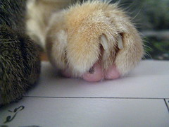 Maggie's creamsicle paw