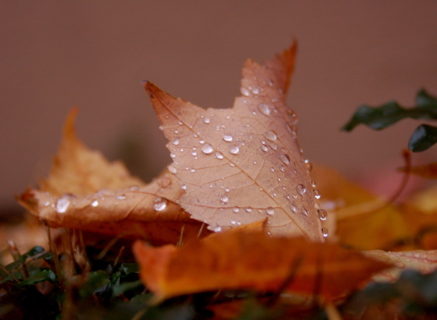 leaf_raindrops_620x456_close