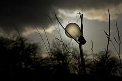 Electric Lighting (Bobshaw) Tags: park light summer bulb hill summerhill hartlepool