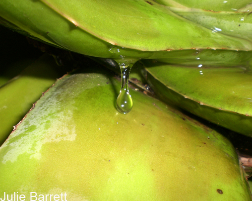 Macro Raindrop