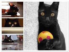 Scoti mosaic (julioc.) Tags: pet cats pets portugal kitchen backlight cat lumix fz20 eyes fdsflickrtoys mosaic quality fear hunting gatos gato hunter cozinha contrejour blackcats hypnotic scoti caa caador julioc hipntico impressedbeauty scti photographybyjulioctheblog j0509