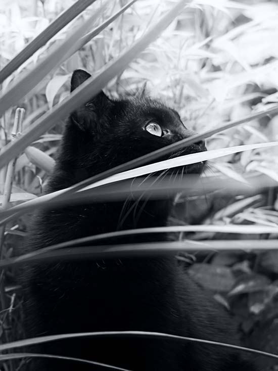 Winston in Grass by Darkr, on Flickr