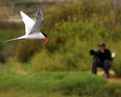 Shooting the Birds (Dean of Photography) Tags: bigmomma photofaceoffwinner pfogold fotocompetition fotocompetitionbronze herowinner