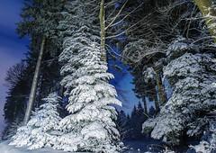 Tel un conte de notre enfance (Valentin le luron) Tags: 20170115 nikon 800 e forêt nature paysage neige nuit étoile bois du jorat vaud sapin romandie suisse lausanne yves paudex