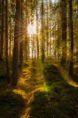 Forest (martinbrun) Tags: tags forest backround lover nature hike trek outdoors outdoor tree trees sunray sunrays ray sunny