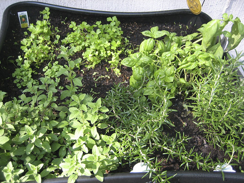 oregano, rosemary, parsley, and basil