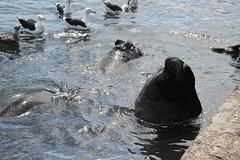 Punta Del Leste (Fabio Favaro) Tags: ocean travel sea holiday bird canon uruguay mar punta viagem carnaval ferias passer uruguai leomarinho gopro t2i puntadelleste