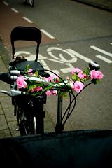 Rose (Stewart Leiwakabessy) Tags: street pink flowers roses white black green bike grey seat gray fake stewart leiwakabessy stewartleiwakabessy