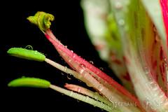 IMGP6845.jpg (Copperrein) Tags: plant flower macro green nature water dark stem pentax michigan detroit crisp waterdroplets naturesfinest k10d pentaxk10d diamondclassphotographer flickrdiamond