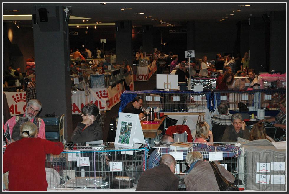 Cat show in Antwerpen 1788882407_40f3257280_o