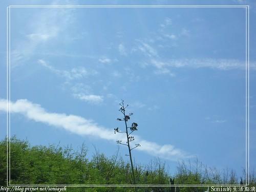 2007澎湖-龍舌蘭