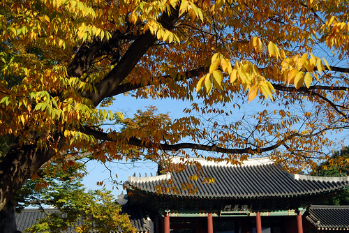 Fall Foliage, Jinseonmun Gate, Changdeokgung Palace