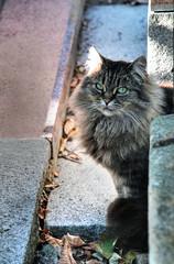Those Eyes (kekyrex) Tags: cats paris cemetery animals felines monmartrecemetery