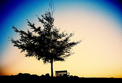That bench again... (Trapac) Tags: uk autumn trees sunset england film silhouette bench downs bristol lomo lca xpro lomography crossprocessed lomolca slidefilm agfa clifton thedowns 100iso ctprecisa wmh omo agfactprecisa bristoldowns lomoroll5 cliftondown