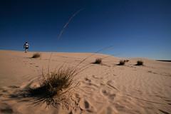 Signs of life (Lil [Kristen Elsby]) Tags: travel summer hot grass landscape nationalpark sand dunes dry australia wideangle roadtrip nsw heat newsouthwales outback arid sanddunes australasia oceania travelphotography outbackaustralia leorex lakemungo mungonationalpark willandralakesworldheritagearea