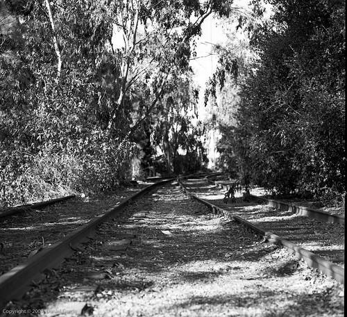 Overgrown tracks