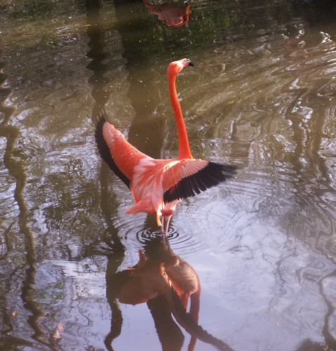Flamingo Display, Back
