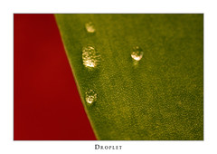 Droplet (Philipp Klinger Photography) Tags: red macro green water closeup leaf drop tulip droplet colourartaward dcdead
