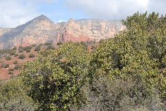 WED_3006 (Cubadad) Tags: arizona desert sedona redrocks