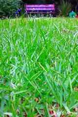 QUINTAL (Tha Steiger) Tags: verde green banco grama thasteiger