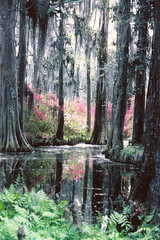 Cypress Gardens  1978 (snow41) Tags: reflection sc water garden azaleas charleston explore swamp spanishmoss cypress abigfave irresistiblebeauty flickrsexquisiteshots bestcasescenery fabulousscenery