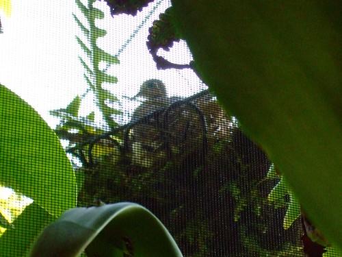 Momma in her nest
