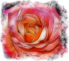 Fantasa sobre una rosa (Jose Luis Mieza Photography) Tags: flowers flores flower fleur rose fleurs flor rosa fractal benquerencia reinante impressedbeauty jlmieza betterthangood multimegashot reinanteelpintordefuego joseluismieza
