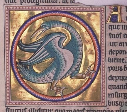 8- Folio 54v detalle- Halcyon- © Aberdeen University Library
