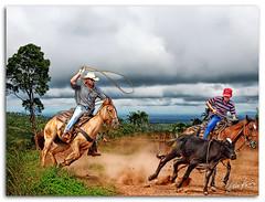lasso (Kris Kros) Tags: horse photoshop photography cow high bravo cowboy dynamic post rope 64 processing kris calf 2008 range challenge hdr pinoy pp kkg lasso cs3 photomatix kros kriskros 1xp kk2k kodakero pkchallenge kkgallery