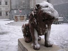 Leoncino con neve