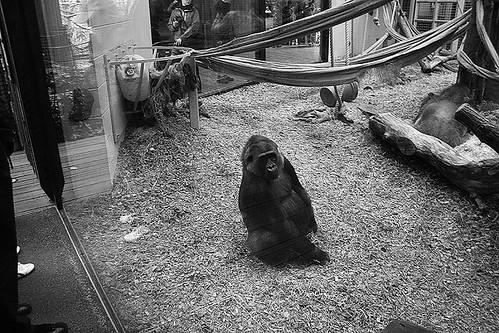 london zoo 014