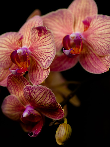 Backyard Orchids 1