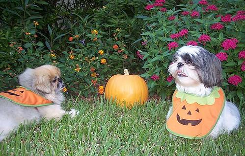 halloween_toby_gizmo