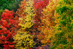rainbow connection (Ben McLeod) Tags: autumn trees fall colors leaves colorful newhampshire fallfoliage foliage concord 105mmf28gvrmicro