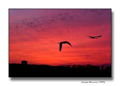Vol de nuit... (Claude Bencimon) Tags: sunset sky nature birds flamingos ibeauty bestofr