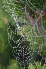 IMG_9230.JPG (resistealeau) Tags: fog spiderweb roadtrip saultstemarie