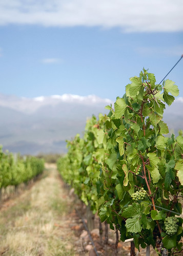 Salentein Vineyard