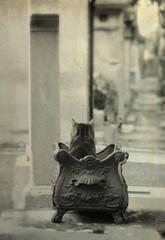 Puss In A Pot (kekyrex) Tags: cemeteries cats paris animals portraits felines monmartre